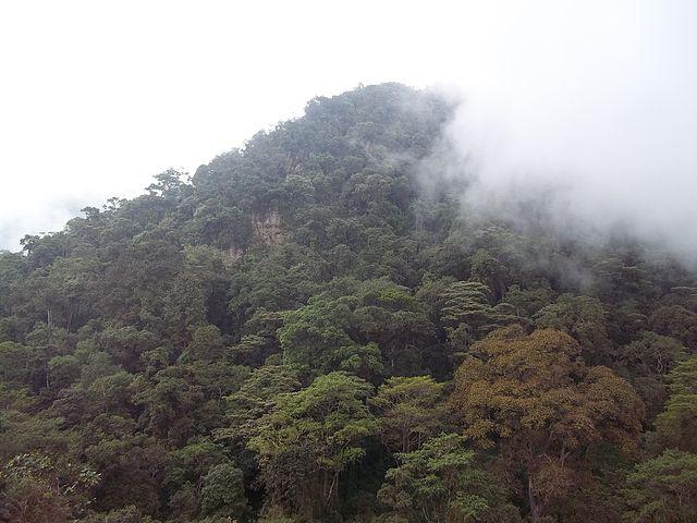 Trekking en Colombia-  Reserva Chicaque  - Bosque de Niebla