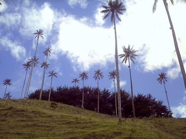 Trekking en Colombia-  Valle del Cocora - Bosque de Palmas