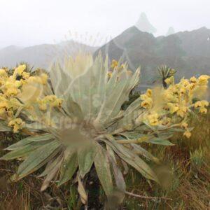 Senderismo PNN Chingaza-Lagunas de Siecha