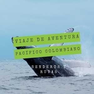 viaje-de-aventura-pacifico-colombiano-avistamiento-de-ballenas