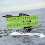 viaje-de-aventura-pacifico-colombiano-ballena-jorobada